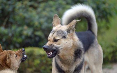 Honden het maar lekker zelf op laten lossen samen? Nee, niet altijd!