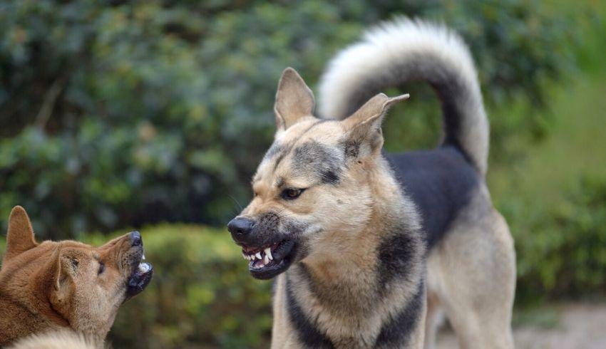 Honden zelf uit laten zoeken