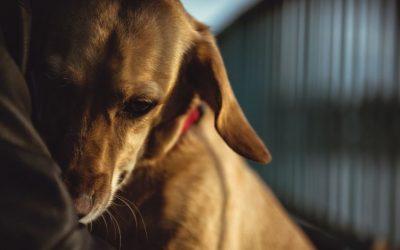 Hoe handel je het beste als jouw hond ergens bang voor is? Gewoon meenemen? Of iets anders?