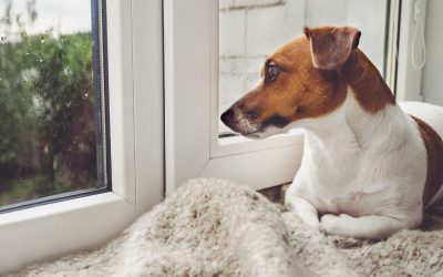 Heb jij een te sterke band met je hond? Pas op voor verlatingsangst.
