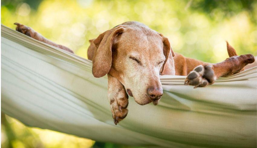 Je hond trainen om juist lekker niets te doen.. een leuke oefening om relaxt gedrag te versterken.