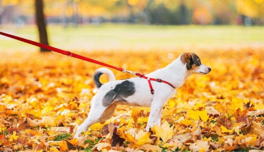 Trekken aan de lijn bij het zien van andere honden