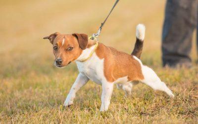Waarom het corrigeren van je (uitvallende) hond vaak averechts werkt