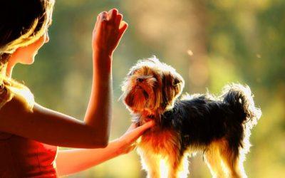 """Is je hond bang voor (harde) geluiden? Start met het maken van """"een spaarpotje"""" met positieve ervaringen!"""