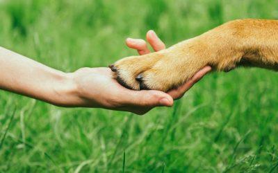 Als je hond bang is mag je hem dan steunen en aandacht geven? Of moet je hem negeren?