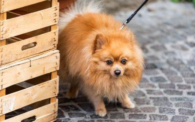 Wat kan je doen als jouw hond buiten erg angstig is en direct weer naar huis wil vluchten?