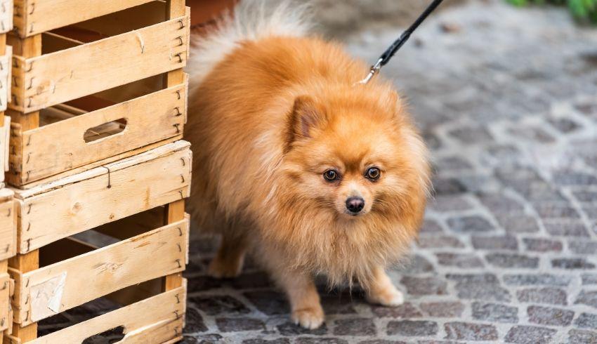 Hond angstig wandelingen