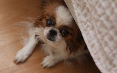 Is jouw hond bang voor bezoek? Wat kan je dan beter wel en beter juist niet doen?