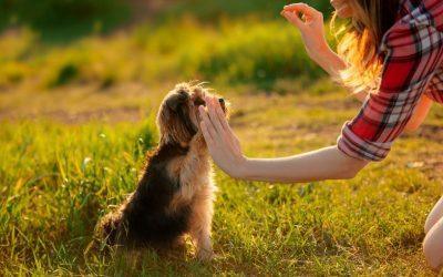 Pak jij echt iedere mogelijkheid om je hond te belonen of vergeet je het regelmatig?