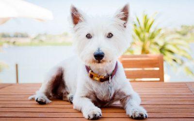 Geef jij jouw hond voldoende informatie en duidelijkheid? Of kan je hierin nog wat verbeteren?