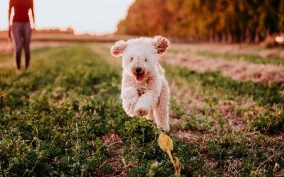 Overvalt het gedrag van je hond jou regelmatig? Maak concreet wat er precies gebeurt en krijg grip!