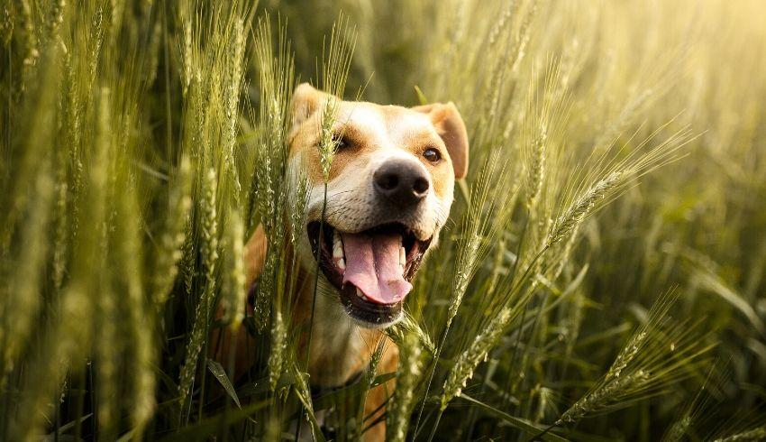 Alleen het gedrag van je hond veranderen is niet genoeg. Jijzelf zal ook veranderingen moeten maken.