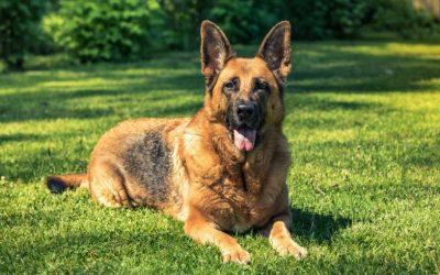 """Laat het ras van je hond eens los en kijk naar hem als individu. Ga hem echt """"zien""""."""
