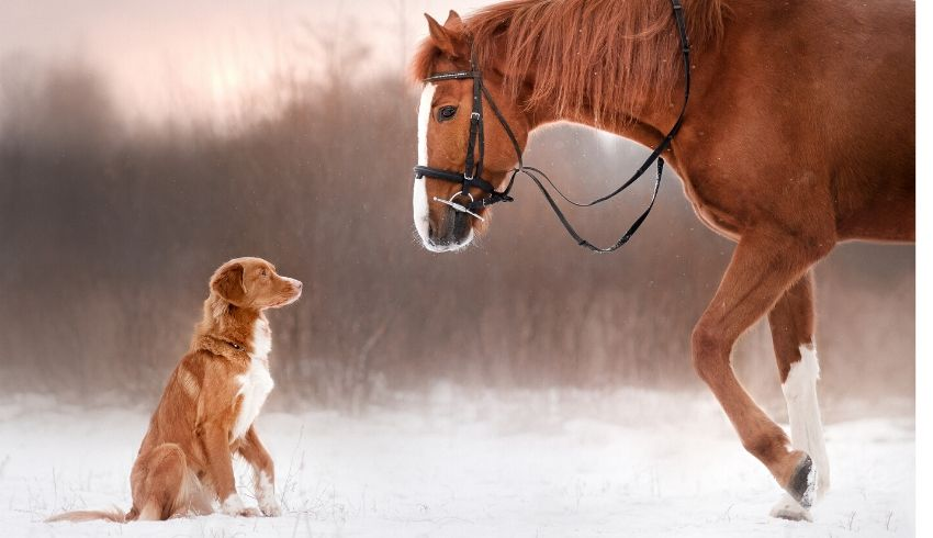 Honden en paarden