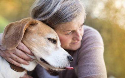 Vindt jouw hond knuffelen eigenlijk wel prettig? Voor heel veel honden is dit niet het geval.