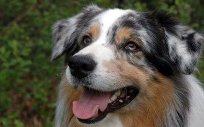 Komt er een hond? Kijk dan niet alleen naar dat leuke of mooie uiterlijk. Zijn jullie een match?