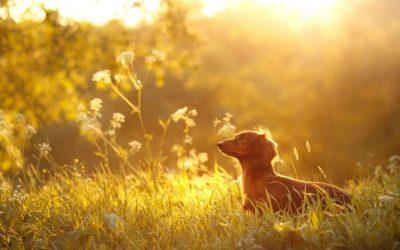 Moeilijke situaties met je hond vermijden, waarom dit in het begin van training echt noodzakelijk is.