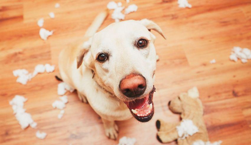 Hond gewenst gedrag belonen