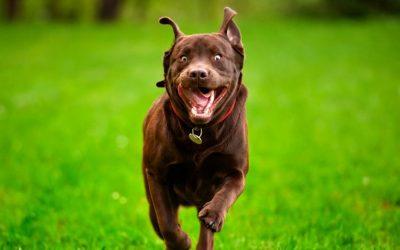 Hoe bescherm ik mijn hond tijdens een onprettige ontmoeting met een andere hond?