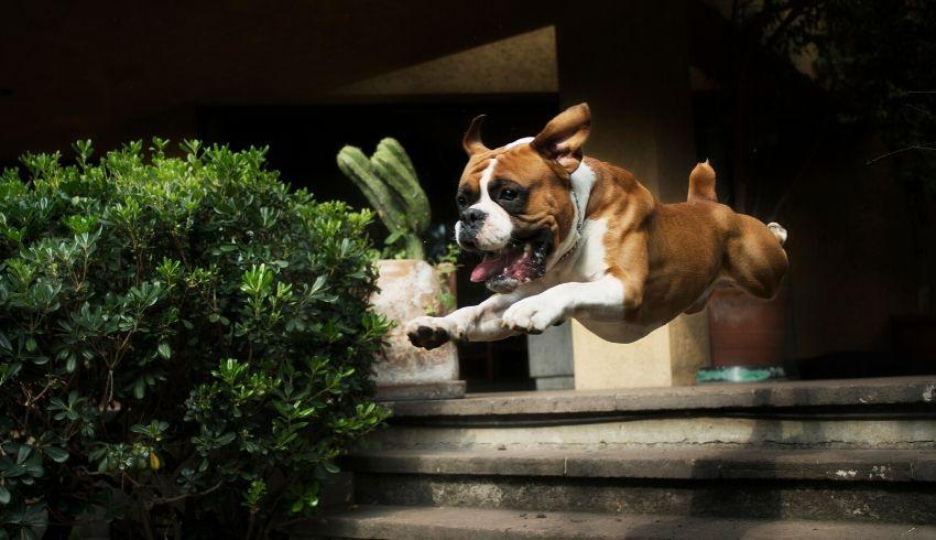 Visite ontvangen met een opdringerige en overenthousiaste hond. Hoe pak je dit aan?