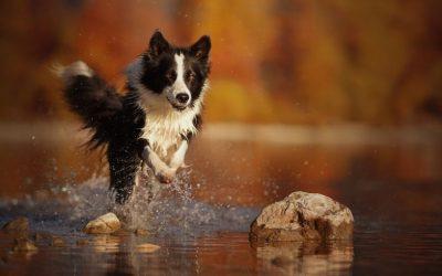 Doe jij hartstikke veel met je hond, maar blijft hij onrustig? Misschien is hij overprikkeld!