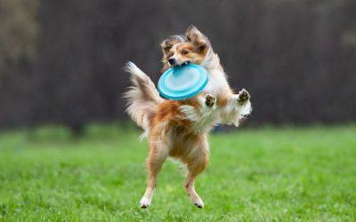 Af en toe eens lekker uit balans gaan met je hond hoort ook bij een leven in balans. Doe eens gek!