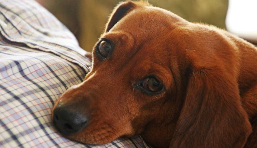 Weet jouw hond echt dat iets niet mag? Of is er sprake van een miscommunicatie tussen jullie?