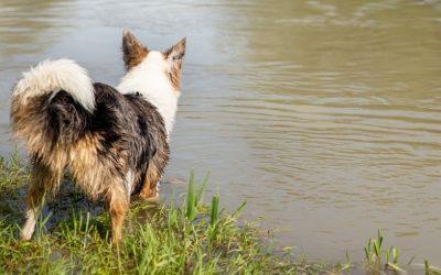 Heeft jouw hond moeite met andere honden? Zicht krijgen op zijn stress-drempel is een onmisbare stap.