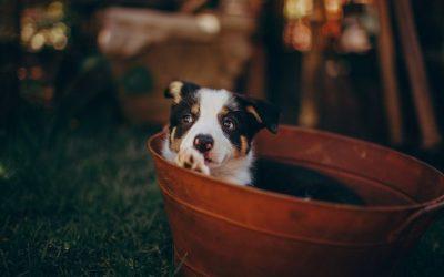 Het stress-emmertje.. wat is dit nu precies en wat is de link met gedragsproblemen bij honden?