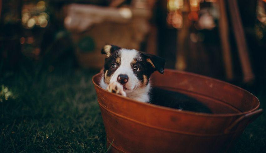 Hond gedragsproblemen trigger stacking