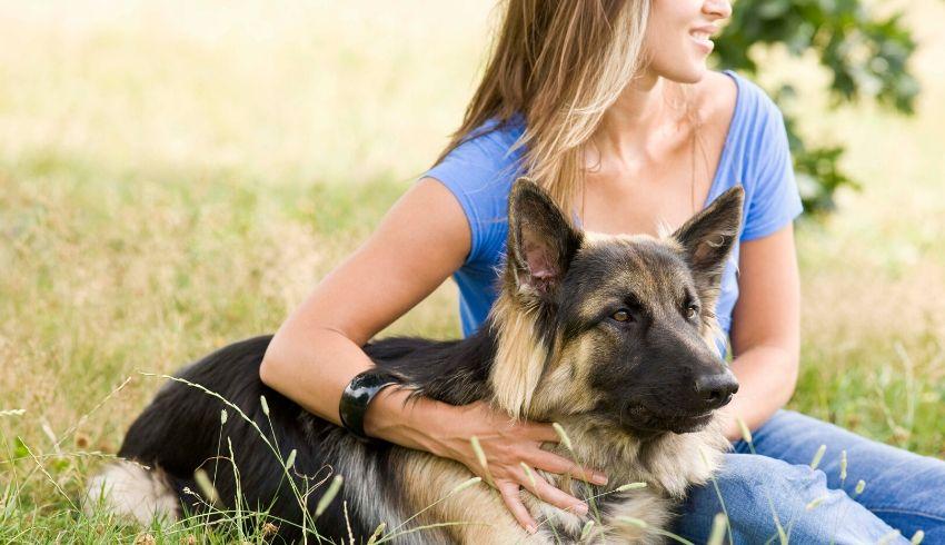 Training hond probleemgedrag terugval