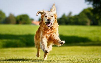 Leg jij de lat misschien ook weleens te hoog in de begeleiding en training van je hond?