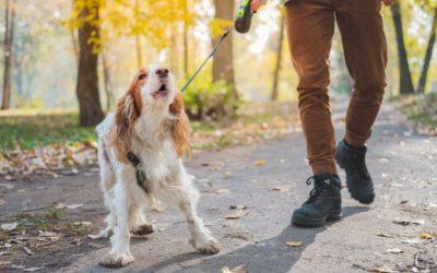 Valt jouw hond uit aan de lijn? Waarom doet hij dit en welke stappen kan je zelf al zetten?