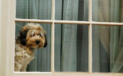 Weet jij zeker dat jouw hond zich veilig voelt als hij alleen thuis moet blijven? Kijk er eens kritisch naar.
