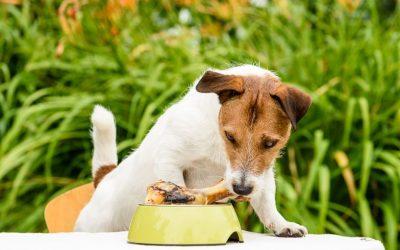 Maak het leven van je hond leuker en interessanter op een hele simpele manier. Bied hem verrijking aan!