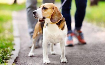 Wat kan je doen als je met jouw uitvallende hond ineens een andere hond tegenkomt?