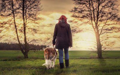 Wat een fijne wandeling voor een hond is en hoe dit vaak botst met de behoefte van mensen.