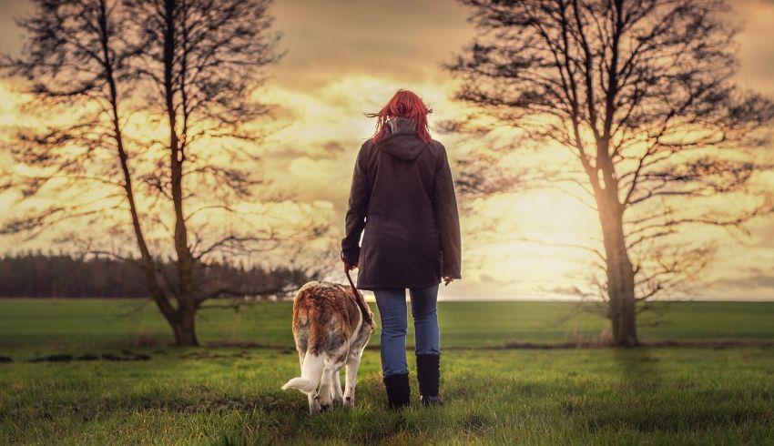 Wandelen hond ontspannen