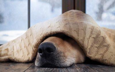 Over methodes en alles wat goed en fout is in de hondenwereld. Ik krijg er soms de kriebels van.