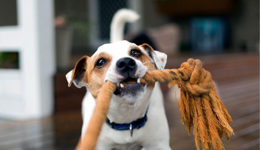 Drijft het bijtgedrag van je pup je tot wanhoop? Ga er verstandig mee om en voorkom problemen.