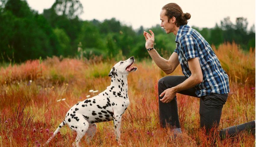 Verwachtingen hond gedragsproblemen