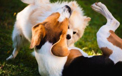 Nee, mijn hond wil niet met de jouwe spelen en dat zegt geen snars over of ze wel of niet sociaal is.