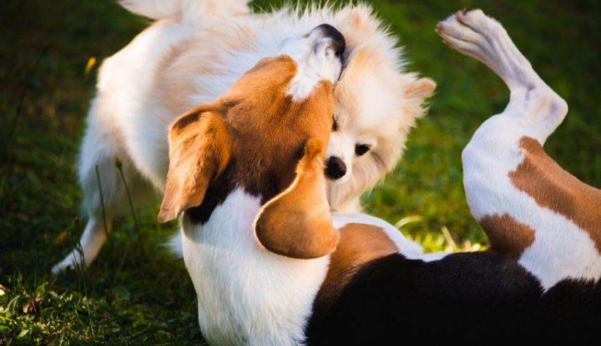 Sociale hond spelen