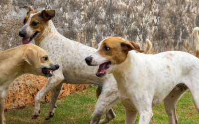 Even lekker spelen met andere honden… Weet je zeker dat het wel echt spel is? Voorkom problemen!