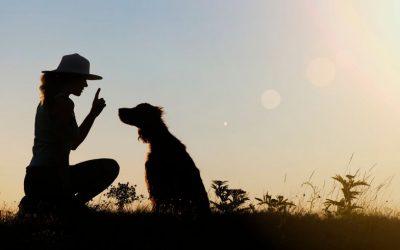 Veelvoorkomende valkuilen in hondentraining. Check het artikel en kijk eens welke jij herkent.