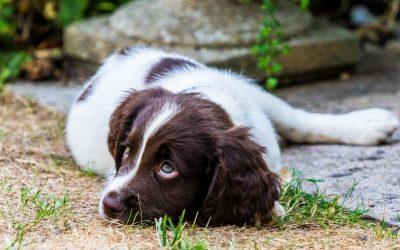 Hebben jij en je hond dezelfde wensen en behoeftes? En zijn jouw verwachtingen realistisch?