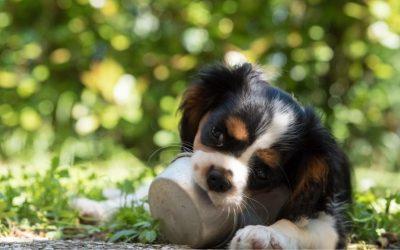 Wil je op cursus met je hond? Maak dan een bewuste keuze en kijk naar wat je hond aankan. En óf hij het wel aankan…