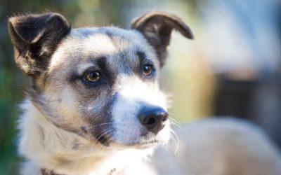 Het van tevoren hebben van verwachtingen van je nieuwe hond kan voor flinke teleurstellingen zorgen.