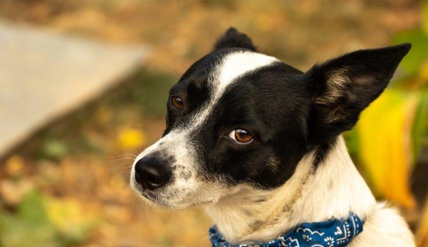 Een vaste route met je hond wandelen of de route steeds afwisselen? Wat is het beste voor jouw hond?