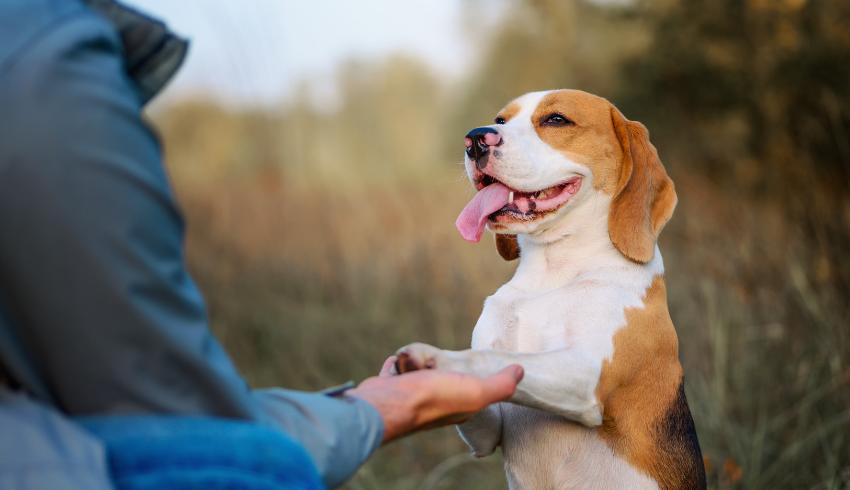 Hondenschool en hondentraining